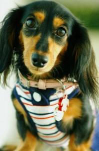 ペット服・犬服をオーダーメイドで作ってみました。