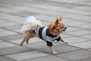 失敗しない犬服の作り方